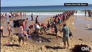 Хора на плажа спасяват акула!