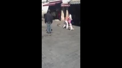 Котка напада куче!
