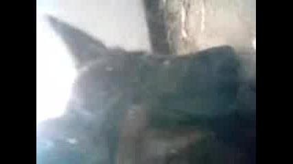 На Балабана кучето изяде котката