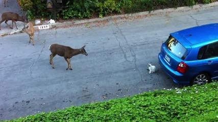 Котка и сърни за пръв път се срещат • интересно запознаване!