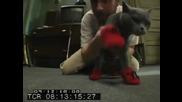 Its Always Sunny in Philadelphia S05e02 - Behind the Scenes - Kitten Mittens
