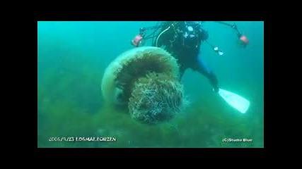 Огромна Медуза