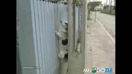 Кучето алпинист !!!