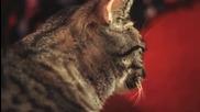 Пееща котка ! :d