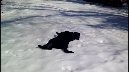 Игриво куче се пързаля на снега