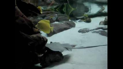 Аквариум В Денвър, Колорадо