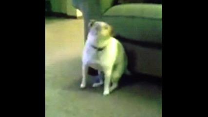 Куче танцува ;д