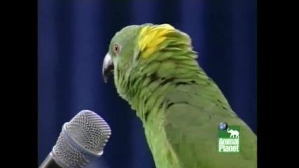 ! Н е В е Р о Я т Е н Пеещ Папагал !