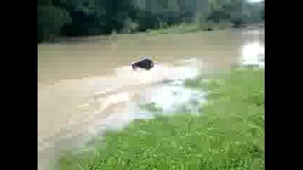 045 Ротвайлер се къпе в река