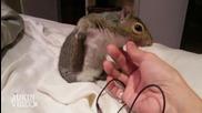 Топ 5 смешни и странни животински звуци... Смях
