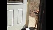 Ще успее ли кучето да вкара пръчката?
