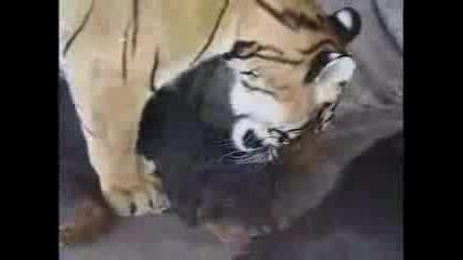 Тигър И Куче - Какво Ли Правят ??? :))))