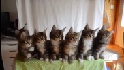 Малки сладки котенца в синхрон