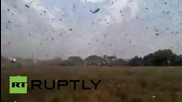 Russia: See man do battle with swarm of locusts