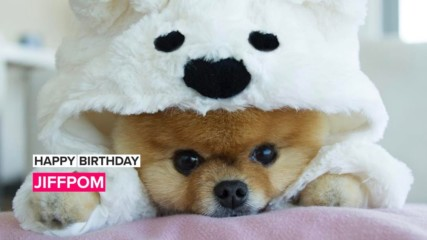 How cute is 10-year-old JiffPom?