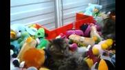 Как да измъкнем котка вместо плюшена играчка