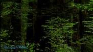 Франсис Гоя - старо дърво, офика