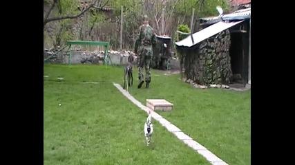 Когато Кучето Бъде Обучено, Трябва Да Му Вярваш!