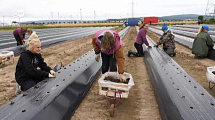 Сезонни работници в Германия: