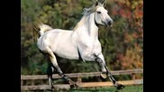 Horses, Horses I Pak Horses