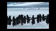 Пингвините Вече Могат Да Летят!