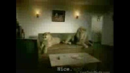Семейство Лъвове