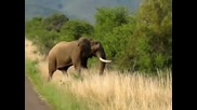 See Angry Elephant think about crushing the car with people in Shocking