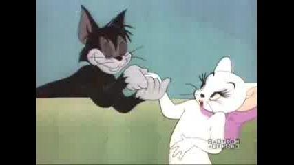 Tom & Jerry - Casanova Cat