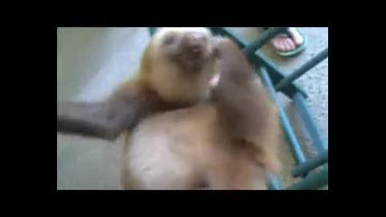 3абавният Ленивец : D