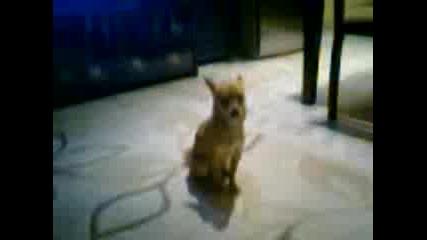 Куче вие на Danza kuduro