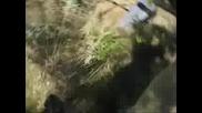 Намериха най - дългата змия мъртва