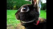 Сладко зайче... ( Смях )