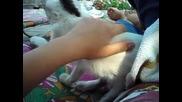 Умното котенце