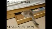 Смешни Котки (част 8)
