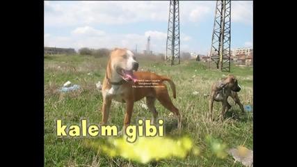 pit&bul yamur