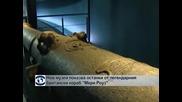 """Нов музей показва останки от легендарния кораб """"Мери Роуз"""""""
