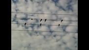 Птичките и тяхната песен в тишината над село Очуша