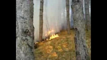 Малък Горски Пожар На Витоша