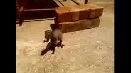 Конкурс Трансформърс Bgtron vs Tunder lizard