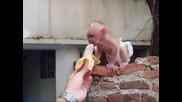 И на маймунките слагат памперси