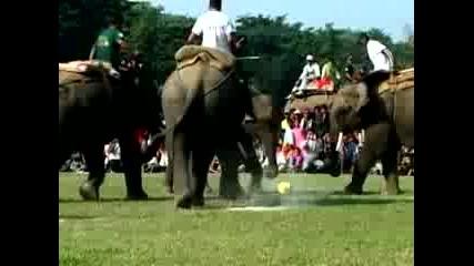 Слонове играят футбол