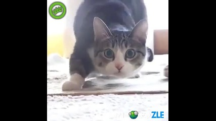 Turn down for What + сладко котенце