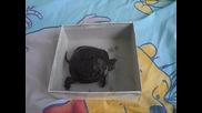 Моята костенурка Митка :)