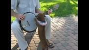Музикално куче