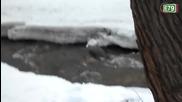 Видра ловува по реката в Благоевград