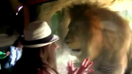 Лъв атакува малко момиче