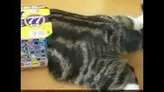 Смешна котка иска да се напъха в картонена кутия