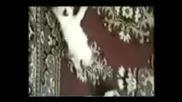 Много Смях И Смешни Котки