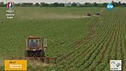 Отпускат 30 милиона евро субсидия за малките стопанства