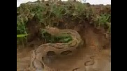 Най - смъртоносните животни Индия отровни змии.flv